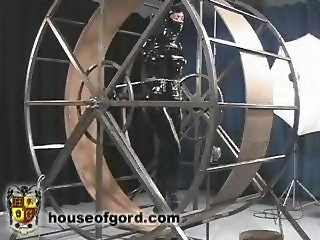 Daily exercise for my slave on mouse wheel